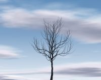 Lonely simple tree silhouette on blue sky background Stock Images
