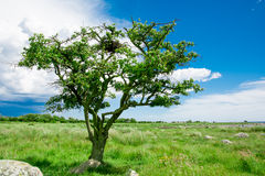 Lonely single tree on the meadow Royalty Free Stock Photos