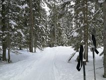 Lonely ski poles are waiting for the skier in a pine forest. Hoch-Ybrig, Switzerland. stock image