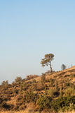 Lonely small tree on a dry hill Royalty Free Stock Photo