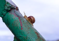 Lonely snail crawling on rusty metal handrail Stock Photo