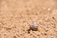 Lonely Snail is crawling in the sand after rain royalty free stock image