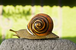 Lonely snail crawls along the cement path Royalty Free Stock Photos