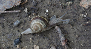 Lonely snail Stock Image