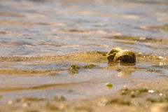 Lonely snails on the water Royalty Free Stock Photography