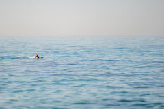Lonely Snorkler Royalty Free Stock Photography