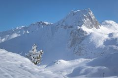 Lonely snow covered tree and mountain in pristine alpine landscape. Calm and tranquil winter scenery. French Savoy Alps. In ski resort La Plagne stock photo