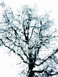 Lonely Snow Tree royalty free stock photo