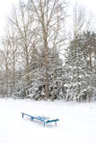 Lonely snowy bench Royalty Free Stock Image