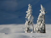 Lonely snowy trees Royalty Free Stock Photography