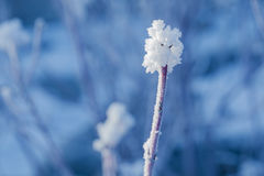 Lonely snowy twig Royalty Free Stock Photo