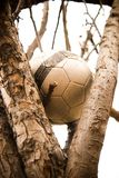 Lonely Soccer Ball Up a Tree royalty free stock photos
