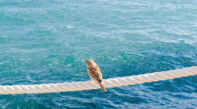 Lonely sparrow on rote near sea Royalty Free Stock Photography