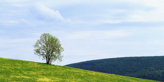 Lonely Spring Tree Stock Image