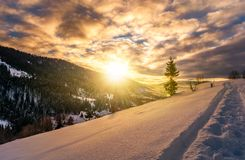 Lonely spruce tree on snowy hillside at sunrise Stock Photo