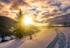 Lonely spruce tree on snowy hillside at sunrise Royalty Free Stock Image