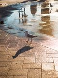 A Lonely Standing Bird Stock Photography