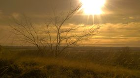 lonely standing trees on a hill against the setting sun stock photo