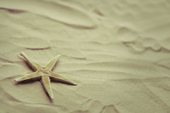 Lonely starfish on a beach sand Royalty Free Stock Images