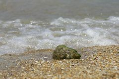 Lonely stone at beach Royalty Free Stock Photography