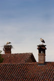 Lonely stork Royalty Free Stock Photo