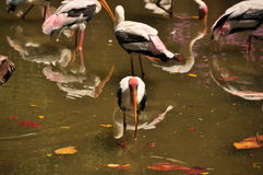 A lonely stork Royalty Free Stock Image