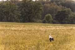 Lonely Stork Standing on the field in Rural Area. Stock Photography