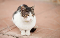 Lonely stray cat Royalty Free Stock Photos