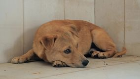 Lonely stray dog lying on the floor in shelter, suffering hungry miserable life, homelessness. Shelter for animals