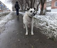 A lonely stray dog on the street in winter Royalty Free Stock Images