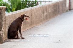 Lonely stray dog on the street Stock Images