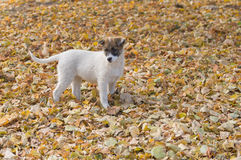Lonely stray puppy looking for the fun in fall park. Cute lonely stray puppy looking for the fun in fall park stock images