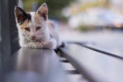 A lonely street cat lying on a bus stop bench. Royalty Free Stock Photography