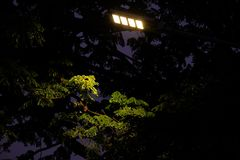Lonely street light shine to some leaves in the darkness. So scared Royalty Free Stock Image