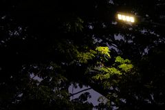 Lonely street light shine to some leaves in the darkness. So scared Stock Photography