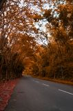 The lonely streets surrounded by autumn trees Royalty Free Stock Photo
