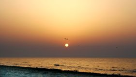 Lonely sunrise. An orange sunrise with seagulls Stock Photos