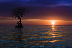 LONELY SUNSET Stock Photography
