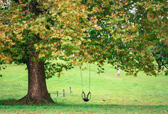 Lonely Swing. Lone tire swing on tree Stock Photos