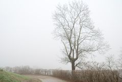 A lonely tall tree and footpath in fog Stock Images