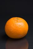 Lonely tangerine Stock Photography