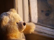 Lonely Teddy Bear. Looking throung the window Stock Photography