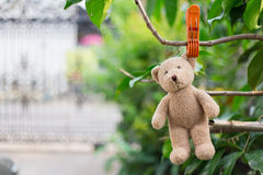 Lonely Teddy Bear Stock Images