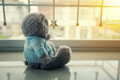 Lonely Teddy bear. In the home Stock Image