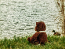 Lonely Teddy stock image