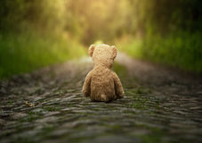 Lonely teddy bear on the road. Lonely teddy bear sitting on the road at the sunset royalty free stock photography