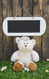 Lonely teddy bear sitting in the green on summertime. Royalty Free Stock Photo