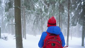 Lonely tourist girl walking on a winter snow-covered coniferous forest in the mountains. Frosty weather stock video