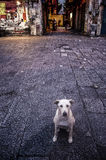 Lonely tramp dog in Sicily, Italy Royalty Free Stock Photography