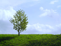 Lonely tree. With juicy grass Royalty Free Stock Photography
